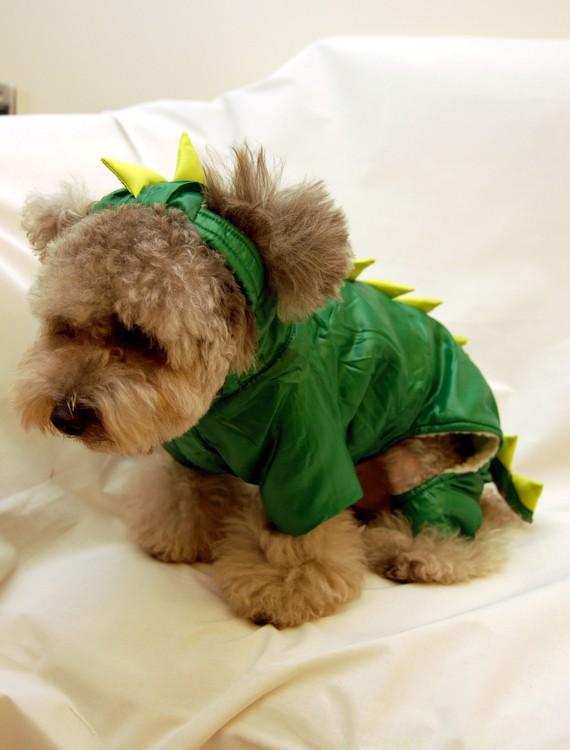 Godzilla Suit Makes Teddy Bear Dog Cry Sad Etsy Dogs