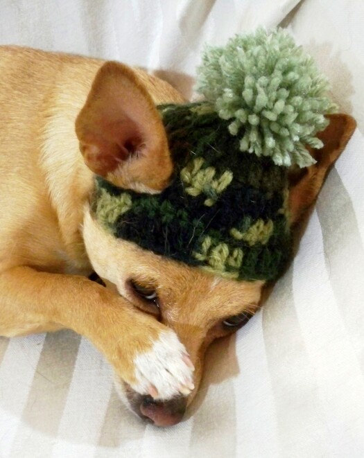 Crochet Pattern For Dog Hat With Ear Holes : ?Never Wanted To Be Your Boyfriend Knit Hat Dog Sad ...